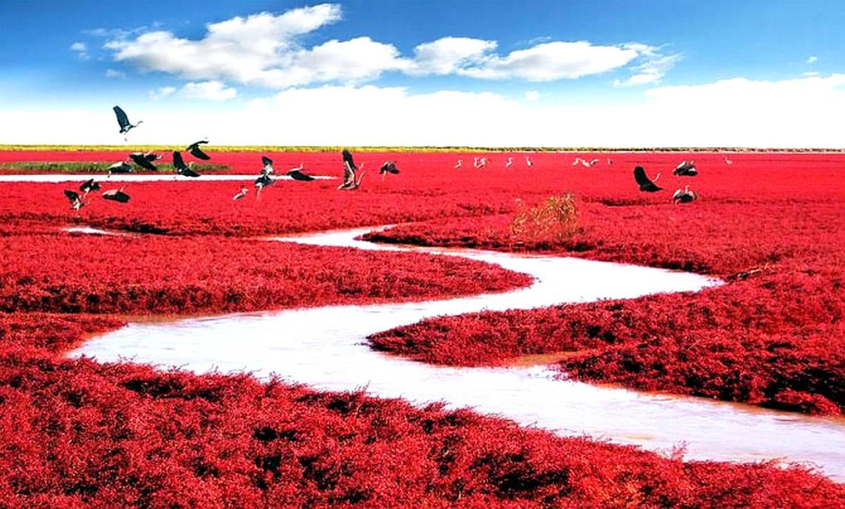 A incrível e bela praia vermelha da China