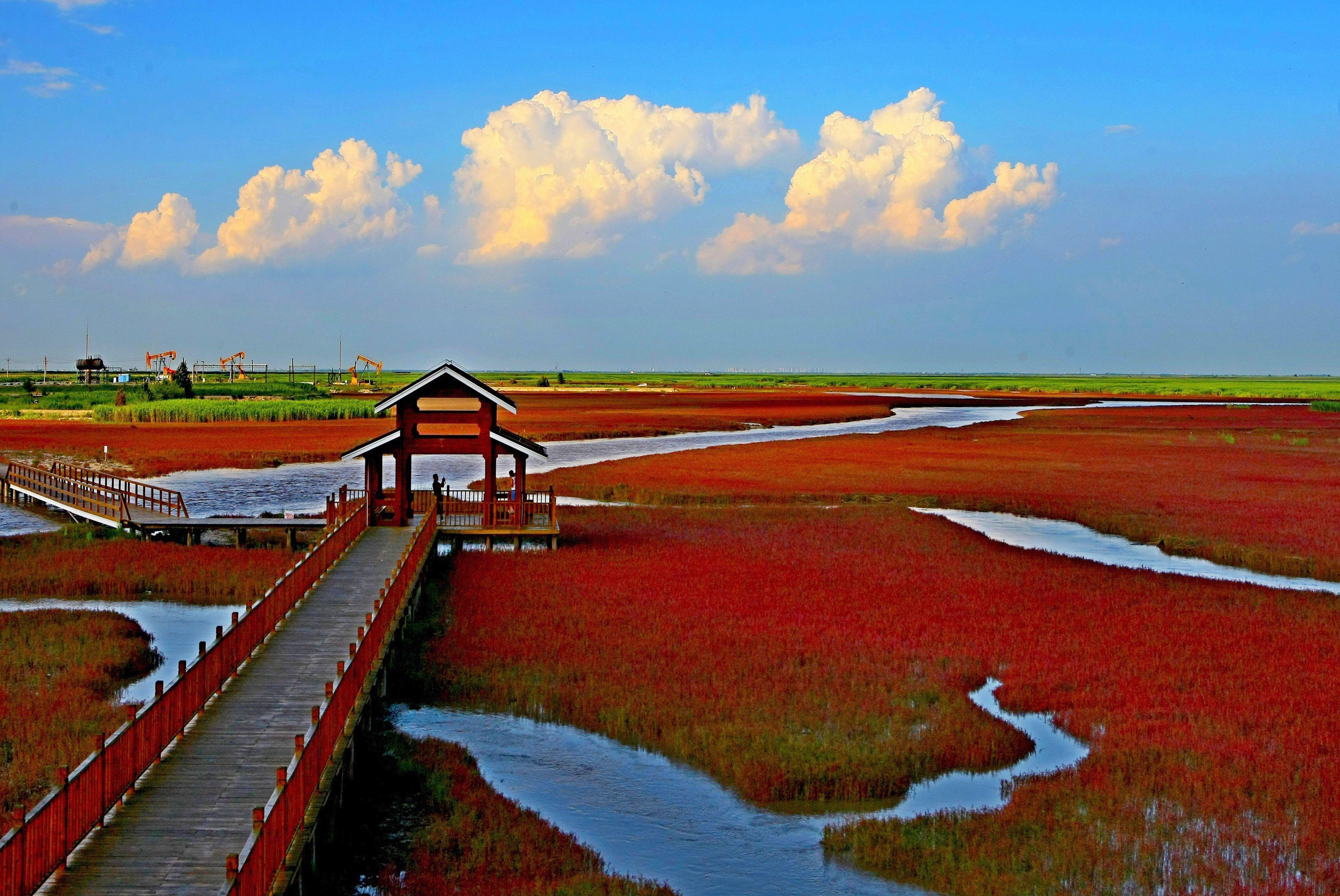 Red bush seashore, Panjing, Liaoning Province, China - Nov 2014
