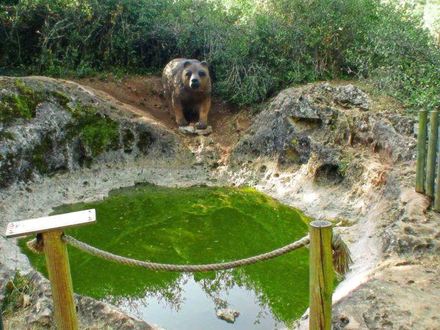 Pia do Urso