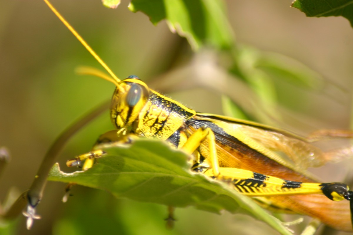 Insectofobia