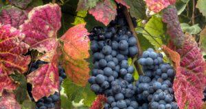 12 curiosidades sobre o Vinho do Porto