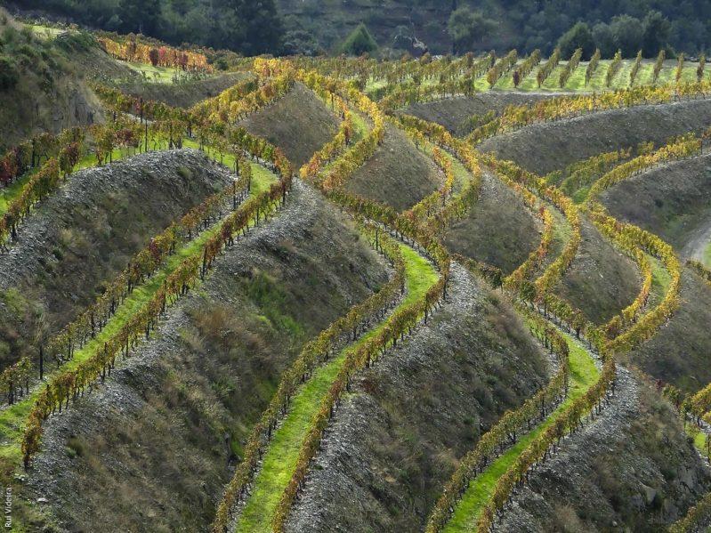 Curiosidades sobre o Vinho do Porto
