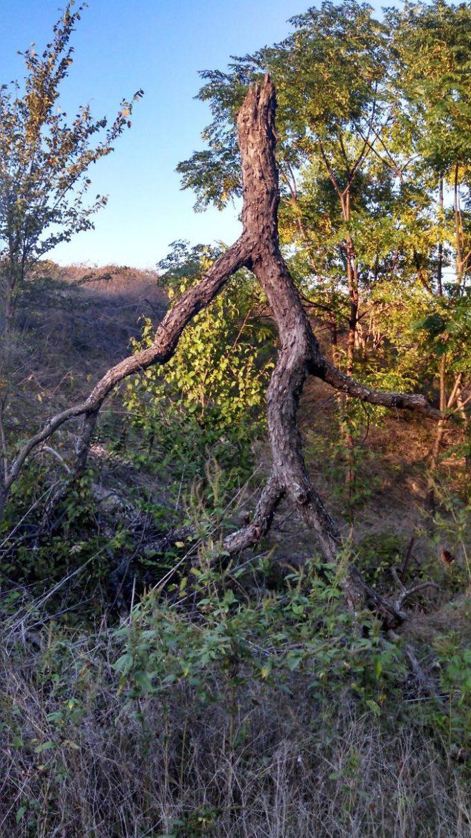 Árvores peculiares e que parecem outra coisa