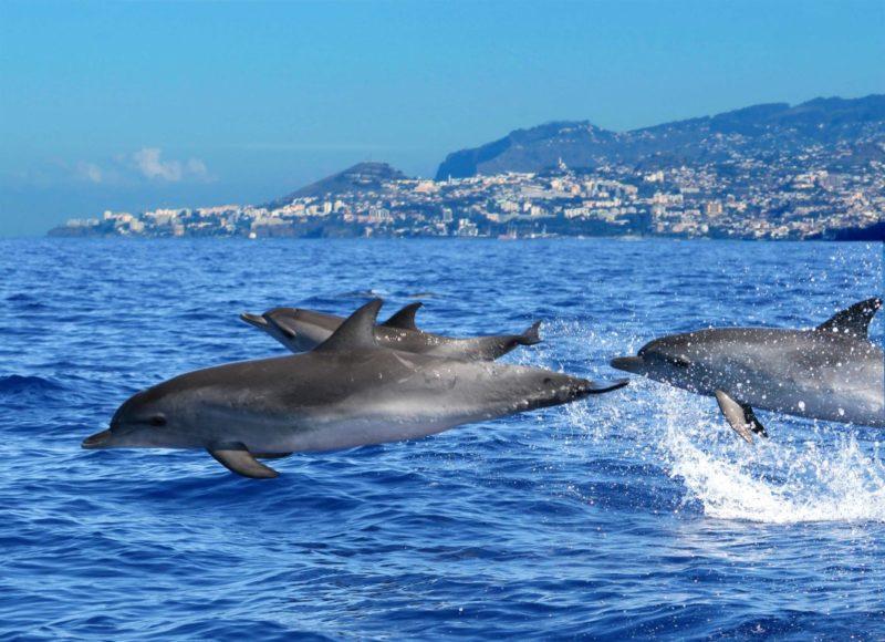 10 razões para visitar a Madeira
