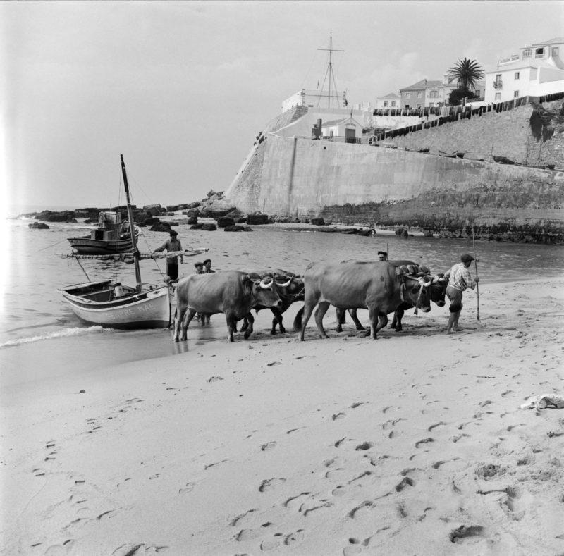 45 fotos de Portugal no século passado