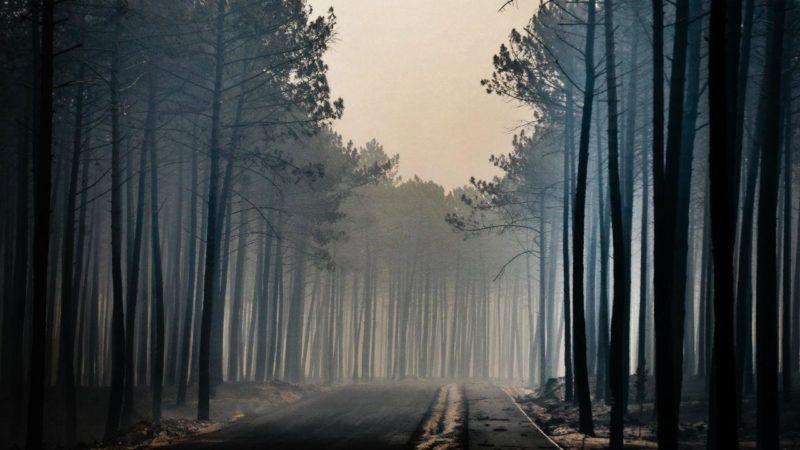 Grande incêndio do Pinhal de Leiria terá sido planeado secretamente entre madeireiros