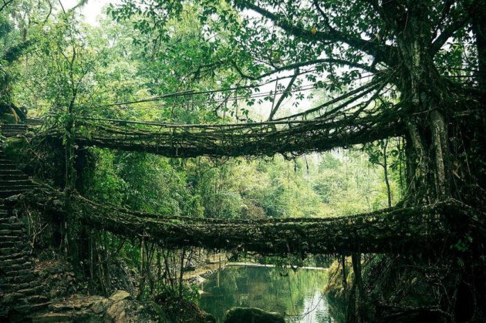 Ponte de cipós, na Índia
