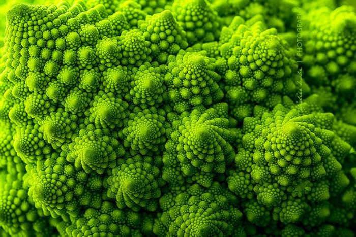 25 fotos fascinantes da geometria da natureza