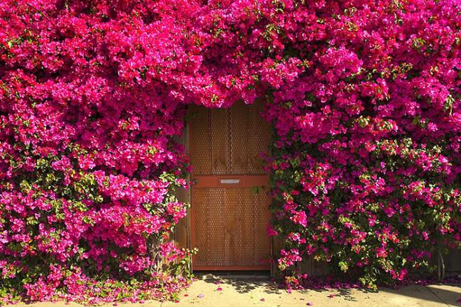 portas das mais bonitas do mundo