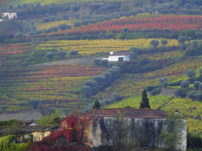 Douro Vinhateiro, Portugal