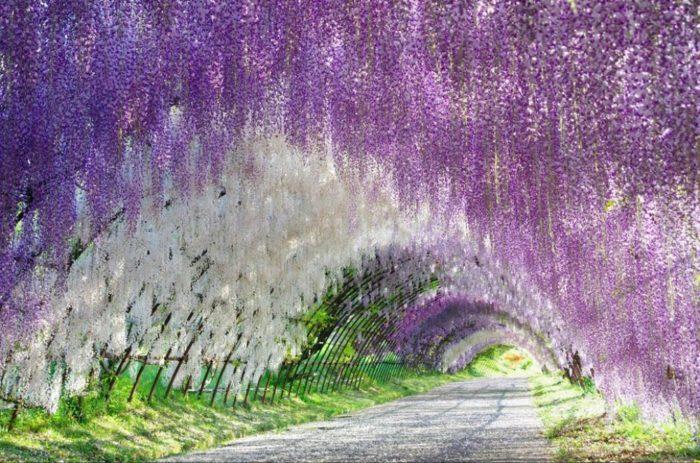 Jardins de Kawachi Fuji, Japão