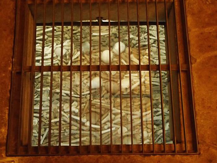 As Catacumbas do Porto, na Casa do Despacho