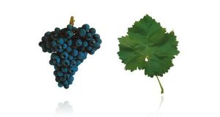 Vinho português, um mundo de diferença