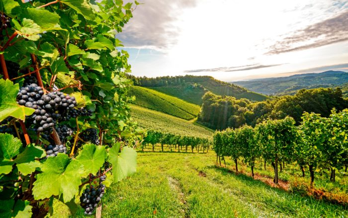 Os Vinhos Tintos mais caros de Portugal