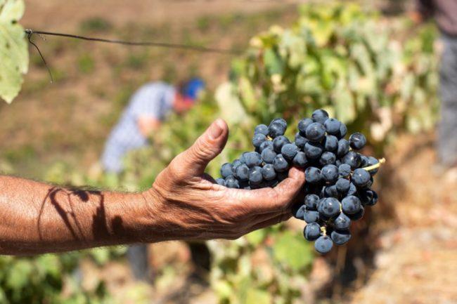 Melhor Vinho do Ano é o Vinho Tinto Quinta Vale Dona Maria