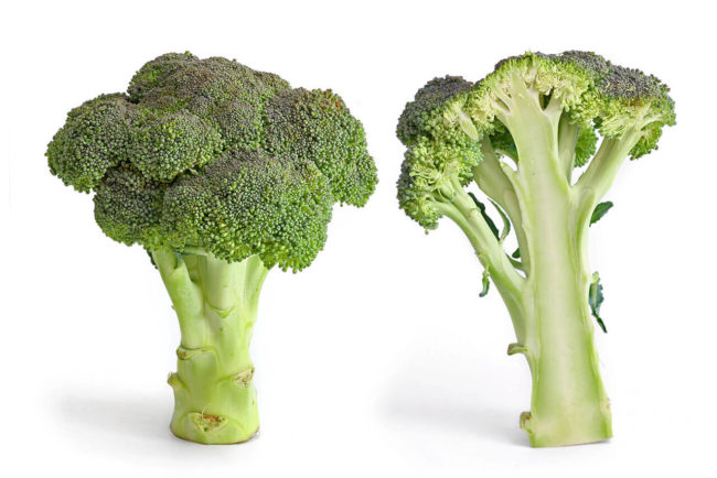 bróculos combatem o cancro da mama