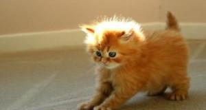 coisas que nunca deve fazer a um gato