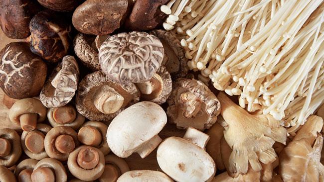 benefícios dos Cogumelos