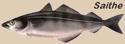 fazer o bacalhau perfeito
