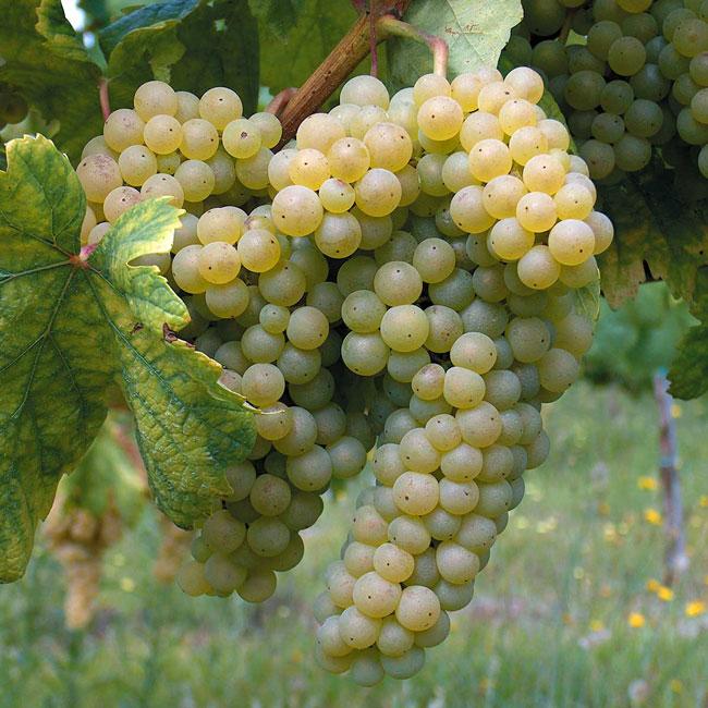 melhores Vinhos Verdes 2020