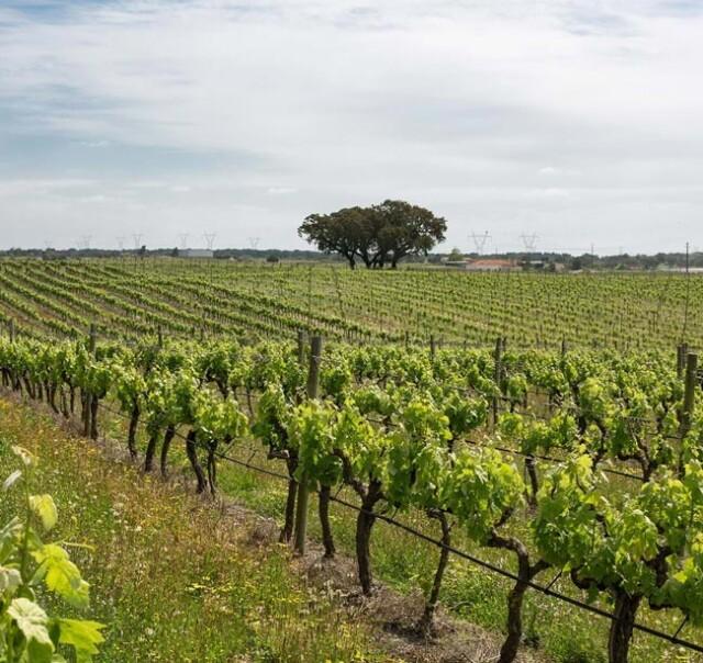 vinho tinto eleito melhor vinho nacional
