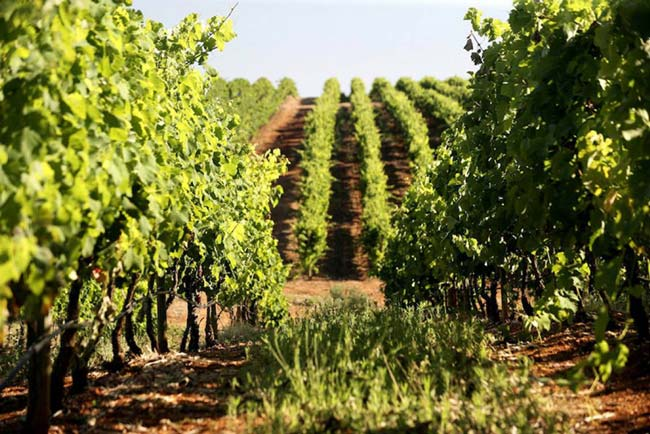 vinhos portugueses no Top 100