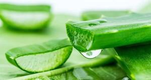 benefícios da Aloé Vera para a pele