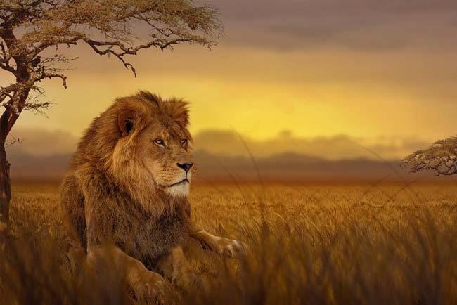 melhores safaris em África