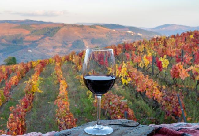 eleito melhor vinho português