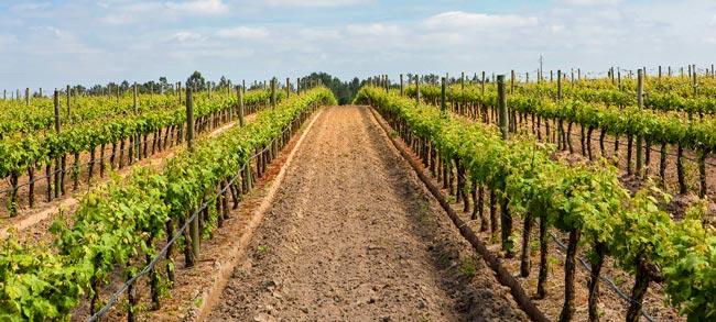 Vinhos Portugueses conquistam ouro