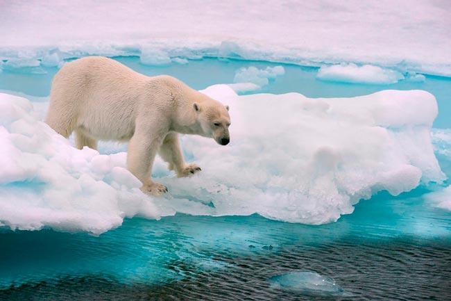 Efeitos das Alterações Climáticas