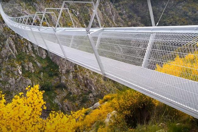 ponte 516